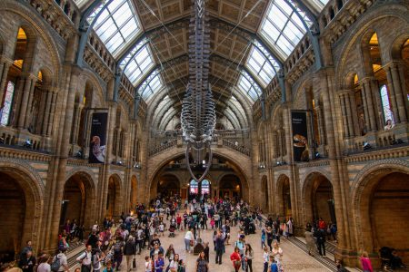 Natural History Museum London in de regen