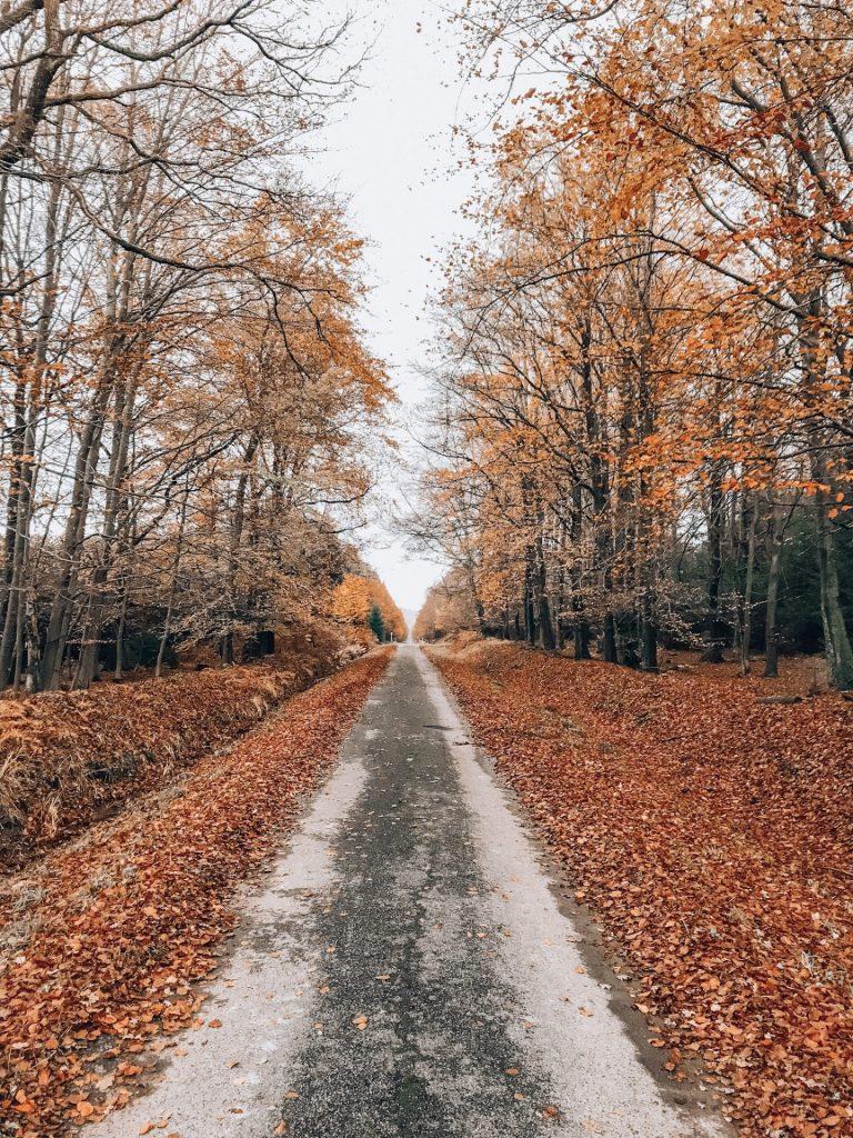 Wandeling Ardennen